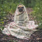 5 conseils pour choisir l'animal de compagnie qui vous convient