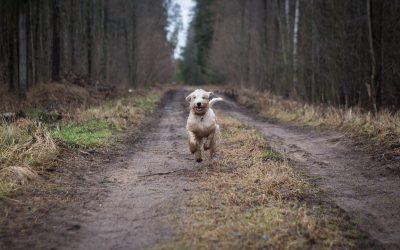 Comment rattraper un chien qui s'enfuit ?