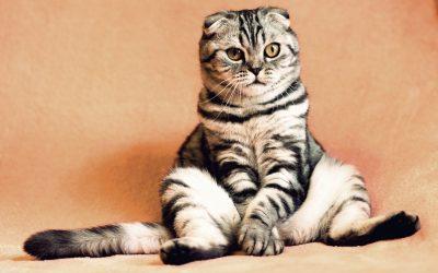Fan de chat, mais impossible d'en avoir, comment palier au manque ?