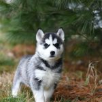 Comment assurer une bonne croissance à son chien ?